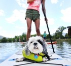 Paulette Bohan paddles back to shore on a stand-up paddleboard while Monster the dog enjoys the ride at the Sacajawea Park Lagoon, Thursday afternoon.